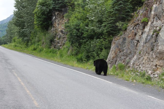 Bear on a road